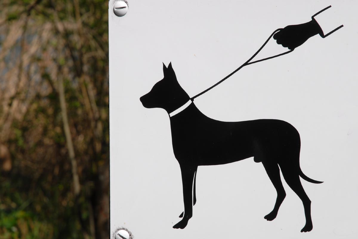 how to walk your dog on a leash